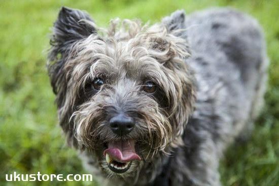 How to train dogs? Training dog's methodillustration1
