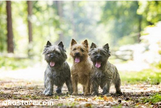 怎么训练狗狗?训练狗狗的方法大全视频