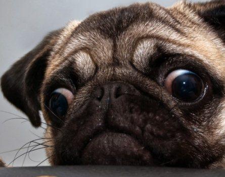 狗狗挑食怎么办 狗狗挑食怎么纠正方法1