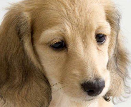 狗狗走丢了怎么办 狗狗丢了怎么找回来1