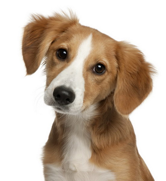 When the dog is vaccinated, you need to pay attention to what dog's vaccine will pay attention before and afterillustration
