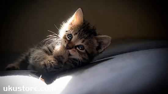 小奶猫能吃鱼吗 猫咪怎么吃鱼才健康