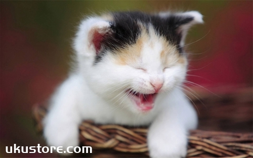 How to give cat care oral, cat brush video tutorialThumbnail