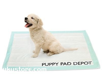 How to train the dog's size, training dog fixed-point sizeillustration2