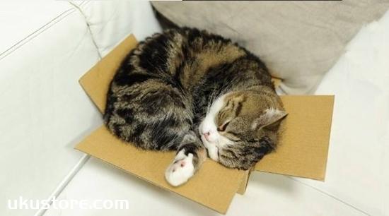 Why do cats like boxes, cats like boxes of big secretsillustration1