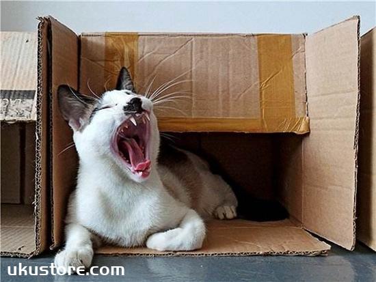 猫咪为什么喜欢箱子 猫咪喜欢箱子原因大揭秘
