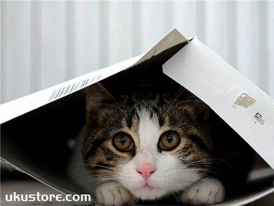 Why do cats like boxes, cats like boxes of big secretsillustration2