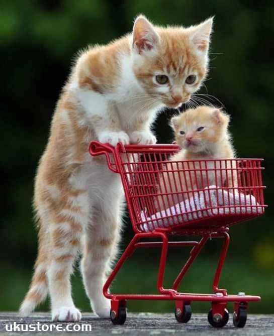大猫和小猫哪个好养 大猫和小猫区别介绍