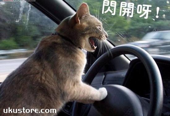 猫咪晕车怎么办 假期出行猫咪晕车解决办法
