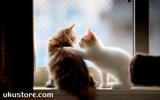 猫咪异味清洁剂有用吗 宠物猫异味清洁剂使用方法