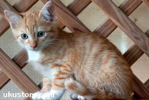 猫咪节育有什么好处 猫咪节育好处介绍