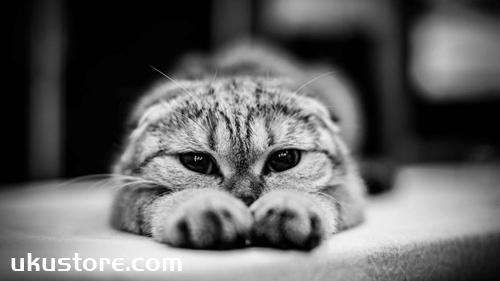 猫咪来回蹭是什么意思 猫咪来回蹭含义介绍