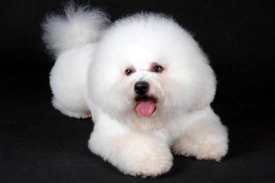 狗狗怎么托运 宠物狗托运流程步骤1