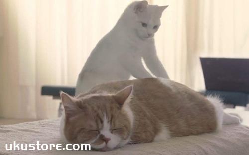 Cat eats too much stomach flatulence how to do, stomach flatulenceillustration1