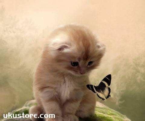 猫咪喜欢什么颜色 猫咪颜色喜好介绍