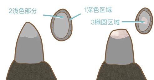 How to help dog shear nails to dog shear nail methodillustration4
