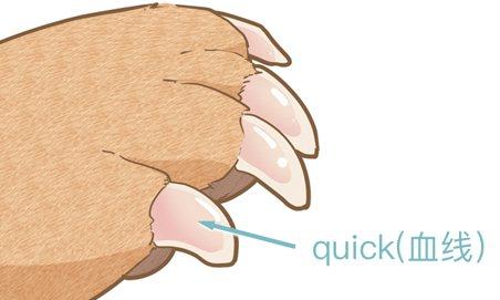How to help dog shear nails to dog shear nail methodillustration3