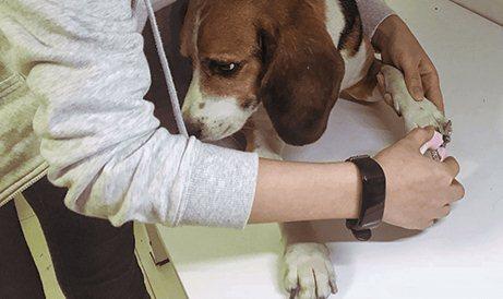 How to help dog shear nails to dog shear nail methodillustration1