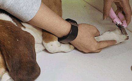 How to help dog shear nails to dog shear nail methodillustration2