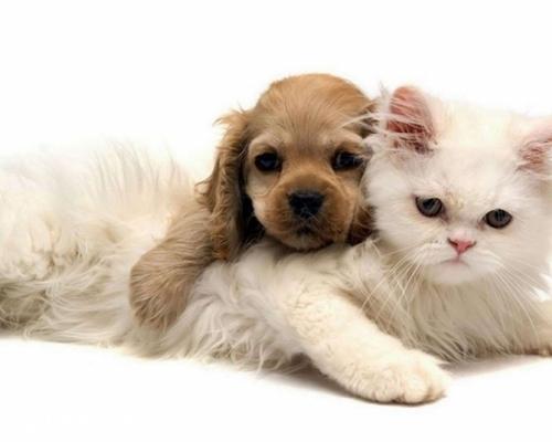 狗粮猫能吃吗 猫咪吃狗粮会怎样