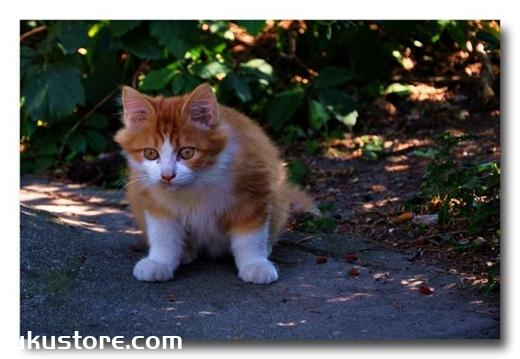 猫咪能自己回家吗 猫咪认路本领介绍