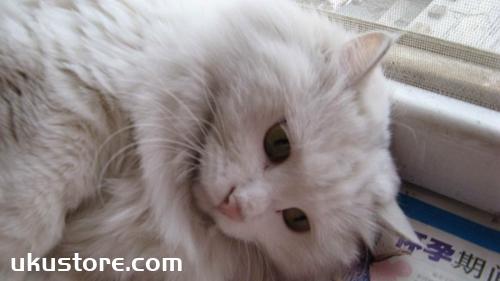 猫咪长青春痘是真的吗 猫咪青春痘长哪里