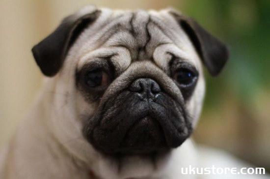 狗狗太胖了怎么办 狗狗减肥计划2