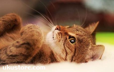 What is the difference between the children's cat food and adult cat food, the difference between the twoillustration1