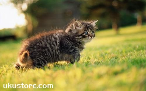猫咪饮食有什么禁忌 猫咪饮食禁忌介绍