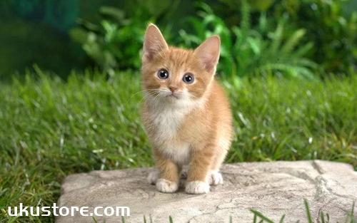 猫咪是否喜欢自己怎么判断 猫咪表达喜欢的方式