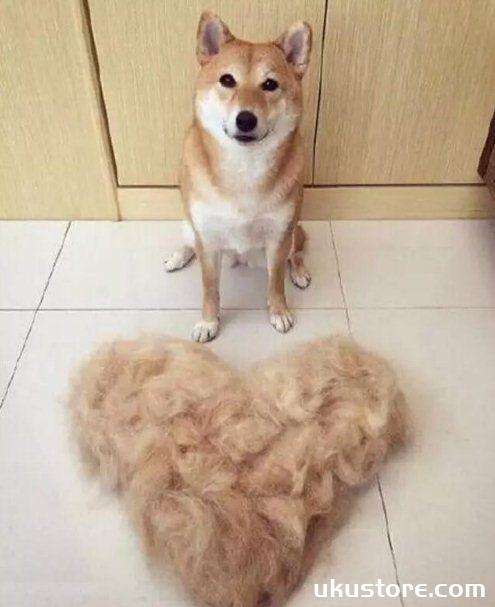 狗狗掉毛严重是什么原因 狗狗掉毛严重原因及解决方法1