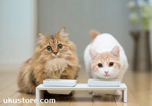 猫咪不吃猫粮怎么办 猫咪不吃猫粮如何解决