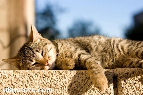 猫咪晒太阳有什么好处 猫咪晒太阳好处介绍