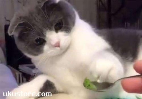 猫吃芥末会死吗 为什么猫吃芥末会死