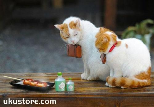 什么属相不能养猫 和猫不相合的属相