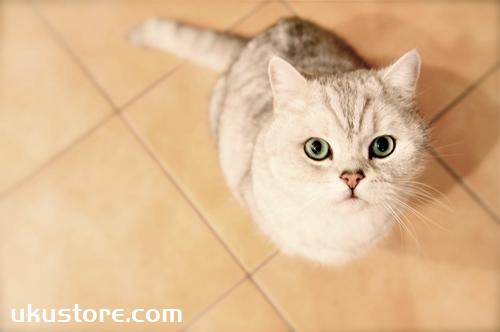 猫寄养需要注意什么 猫咪寄养注意事项