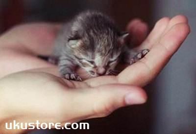 茶杯猫怎么护理 茶杯猫幼猫护理方法