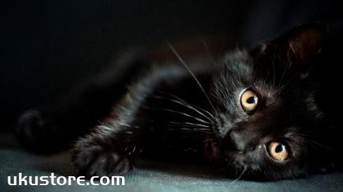 孟买猫怎么洗澡 孟买猫洗澡注意事项