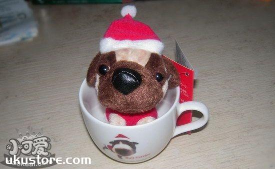 茶杯犬怎么训练跳跃运动 茶杯犬跳跃障碍物训练方法1