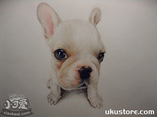 How to take care of old French bulldog maintenance precautionsillustration2