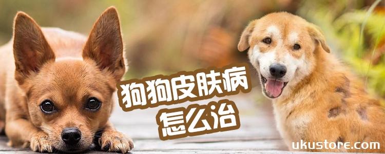 狗狗皮肤病怎么治