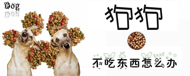 狗狗不吃东西怎么办1