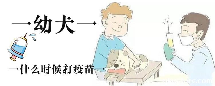 幼犬什么时候打疫苗