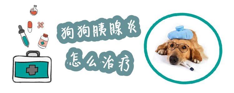 狗狗胰腺炎怎么治疗