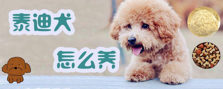 Teddy dog how to raiseillustration