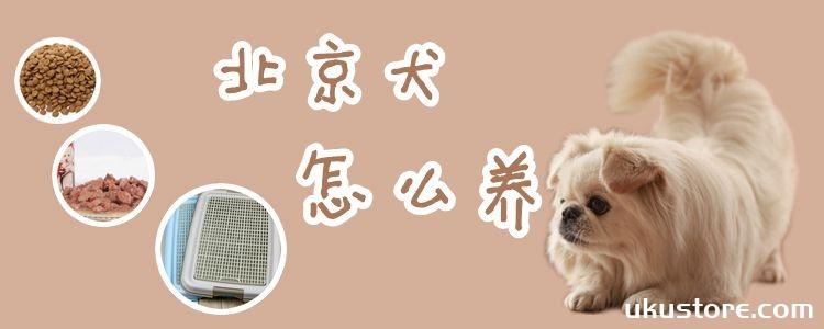 北京犬怎么养