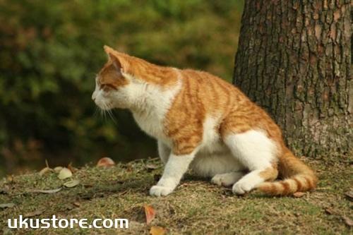 猫咪没精神怎么办 猫咪没有精神原因
