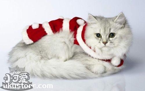 猫猫的性格有哪些?猫咪12种性格解析1