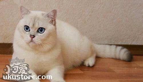 重点色短毛猫怎么洗澡 重点色短毛猫洗澡注意事项