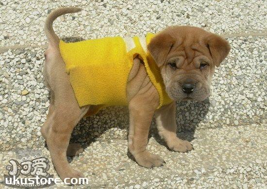 沙皮狗不能吃的东西有哪些 中国沙皮犬不能吃食物大全1